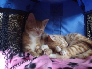 Willow and Rooty, just after they came to us.